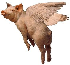 http://jeanporter.cmswiki.wikispaces.net/file/view/pigs_fly_1.gif/260418326/pigs_fly_1.gif