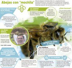 Infografía explicativa de la investigación llevada a cabo en Australia con abejas. / Efe www.farmaciafrancesa.com