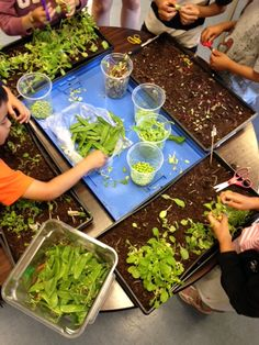 Teaching children how to grow their own vegetables Executive Chef, Growing Vegetables, Teaching Kids, Chefs, Deck, Restaurant, Dishes, Bar, Children