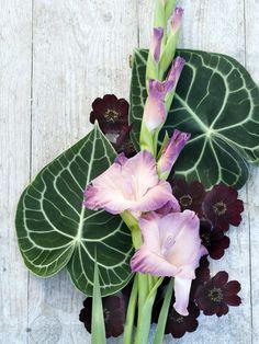 Gladiole Tollwasblumenmachen