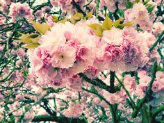 Wie schön und kurzlebig sind doch die Frühlingsboten