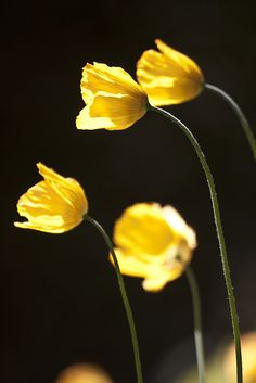 Lovely Yellow Wild Flowers