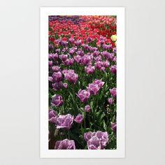 Tulip Gaden 3 Art Print by DiAnne Ferrer - $16.00
