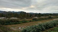 Autumn 秋