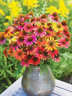 I absolutely love the bright colors in these flowers. Wonderful in the garden and beautiful in a vase.