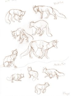 different positions of a fox sketched