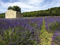 Le plateau d'Albion est situé à cheval entre trois départements : le Vaucluse, la Drôme et les Alpes-de-Haute-Provence. Il se subdivise administrativement en sept communes : Sault (Vaucluse), Ferrassières (Drôme), Aurel (Vaucluse), Revest-du-Bion (Alpes-de-Haute-Provence), Saint-Trinit (Vaucluse), Saint-Christol (Vaucluse), Simiane-la-Rotonde (Alpes-de-Haute-Provence). Il a accueilli, de 1967 à 1999, le site de lancement de missiles nucléaires sol-sol balistiques de la Force de dissuasion…