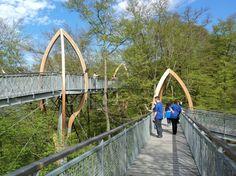 Im Nationalpark Kellerwald-Edersee gibt es geführte Touren auf dem Treetopwalk...