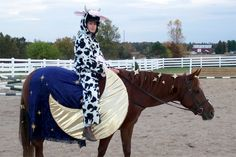 26+Creatively+Costumed+Horses+Who+Are+Masters+Of+Disguise