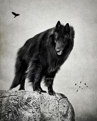 The guardian. (SHARE if you like)  © wolf shadow photography