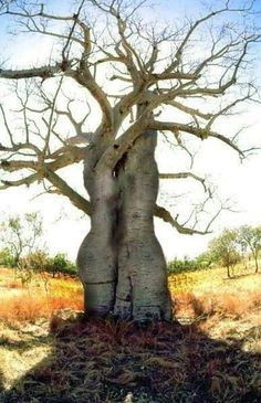 A whole new interpretation of tree huggers. Tree hugging - its good for the soul