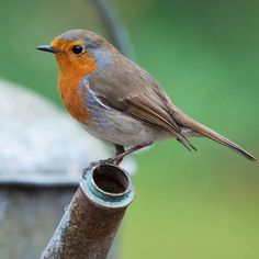 86 Best Birds images in 2019   Birds, Animals, Bird feathers