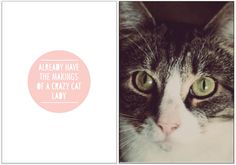 cat, typography, photography,