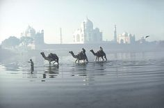 Sabrina et Roland Michaud / Agence AKG  L'Orient de Sabrina et Roland Michaud : Le Taj Mahal. Agra, Uttar Pradesh  http://www.photo.fr/diaporamas/l-orient-de-sabrina-et-roland-michaud.html
