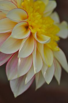 Gorgeous Dahlia ~ And maybe one more! by Sue @Veronica Almanza Saucedaónica Sartori Ryczko on Flickr*