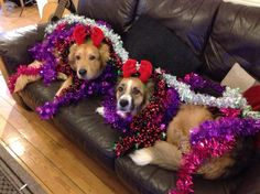 How festive are these pair?! Thank you @littlecoachman. Some very important advice to follow: Always spend an extra few seconds at the pay desk putting money/cards away from pick pockets. Keep safe! Our @WMPDogs are sharing crime prevention messaging in the run up to Christmas. Send us your crime prevention advice and images to @wmpolice on Twitter.