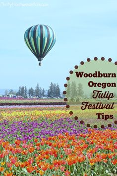 The Woodburn Oregon Tulip Festival is a popular place to visit in the spring and we have tips on visiting with kids & more places to check out while there. Oregon Road Trip, Oregon Travel, Travel Usa, Travel Tips, Places To Travel, Places To See, Travel Destinations, Tulip Festival, Adventure Travel