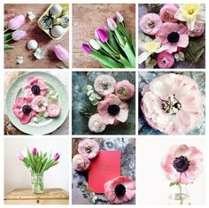 I am obsessed with flowers! Such gorgeous colours! Florals and images by Emily Quinton