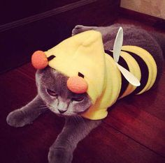 This bitter bee. | 20 Cats Who Deeply Resent Their Halloween Costumes