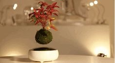 Know what's even more awesome? A SPINNING, FLOATING bonsai tree. | These Floating Bonsai Trees Look Like Actual Magic