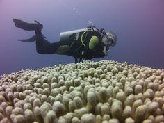 Diving, Sci Fi, Art, Art Background, Science Fiction, Scuba Diving, Kunst, Art Education