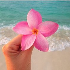 Hawaii uploaded by Masa ♕ on We Heart It Beach Aesthetic, Flower Aesthetic, Summer Aesthetic, Tropical Vibes, Tropical Flowers, Beach Wallpaper, Iphone Wallpaper, Flower Power, Flor Tattoo
