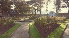 Autumnal sunny morning in the rose garden .