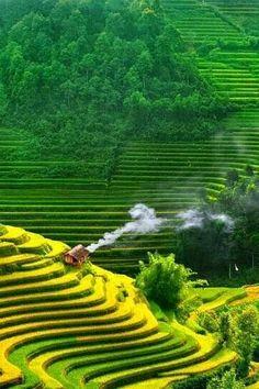 Landscape & Animals — imalikshake: VietNam rice terraces # 2 By Tan. Vietnam Voyage, Vietnam Travel, Asia Travel, Places To Travel, Places To See, Wonderful Places, Beautiful Places, Beautiful Scenery, Amazing Places