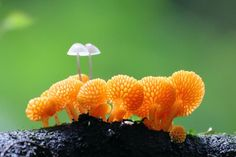 Mushrooms on mushrooms