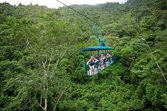 teleferico bosque lluvioso - Buscar con Google