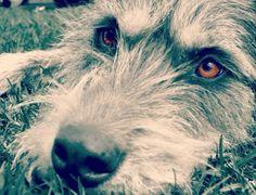 http://weloveirishwolfhounds.tumblr.com/