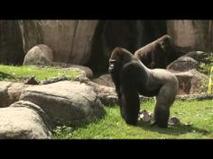 The Real Wild Animals of New Orleans: Episode 8 of 10 - Animal Birthdays - YouTube