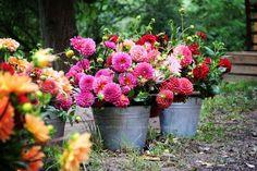 Flower Farm, Beautiful Flowers, Plants, September, Flowers, Essen, Plant, Planets