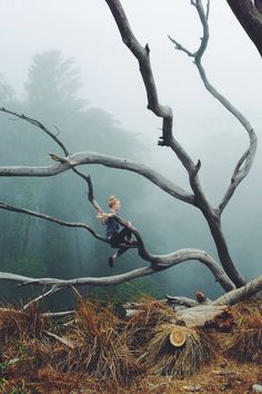 Amazing, twisted tree in a misty forest.
