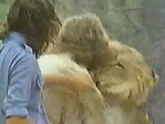 Christian the Lion- Reunion! This is the original silent video, there are more videos with music.