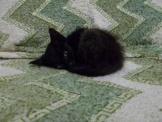 Котенок. © Вербанов Е. (http://verba77.livejournal.com/). #Kitten #Kittens #Cat #Cats