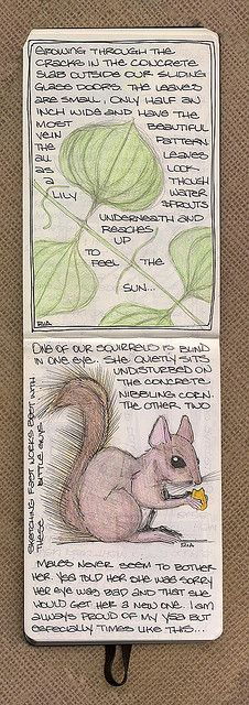 Squirrel & Plant - 2 of 3 by renmeleon, via Flickr