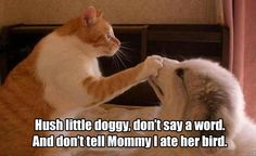 """And if you tell Mommy I ate her bird, Kitty's gonna make you regret it, you little turd.""                                                                                                                                                                                 More"