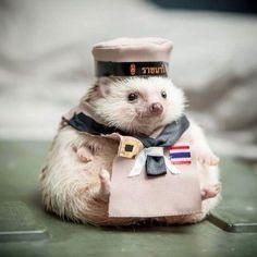 Hedgehogs in Thailand are always in uniform