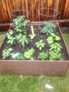 Want to garden but don't have the outdoors space? Raised beds like this one from Greenland Gardener make it easy and affordable!