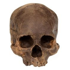 Dark Chocolate Skull. Handmade by visual artist Marina Malvada, each one-of-a-kind skull is made of imported Belgian chocolate and dusted with cocoa powder for a straight-from-an archaeological dig effect. $375.00