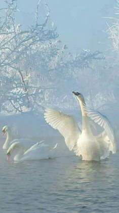 This is how I envision Swan Lake. Beautiful Swan, Beautiful Birds, Animals Beautiful, Cute Animals, Animals Amazing, Pretty Animals, Baby Animals, Animal Kingdom, Animal Photography
