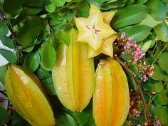 Caribfruits - Carambole / Fruits Tropicaux