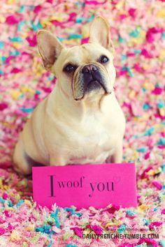 """I Woof You"", French Bulldog Valentine."