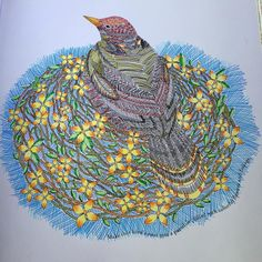 «Crosshatching Bird from Tropical World Coloring Book #tropicalwonderland…