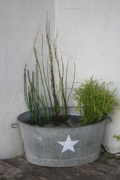 ma petite fontaine avec papyrus, prêle et jacinthe d'eau. Et un petit jet d'eau !!!