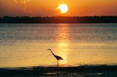 Sunset in Dunedin, Florida. Photo by Alan Gilbertson, G  & G Creative