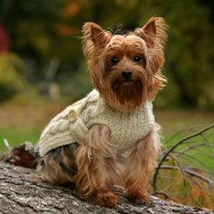 ropa perro ♥