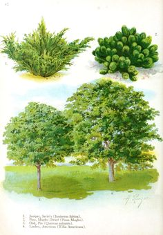 There are more than 865 species of trees in the United States.