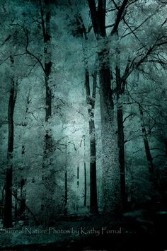"Nature Photos - Dreamy Ethereal Trees, Woodlands, Dark Green Teal Nature Photos, Surreal Tree Art, Fine Art Photo 8"" x 12"". $30.00, via Etsy."